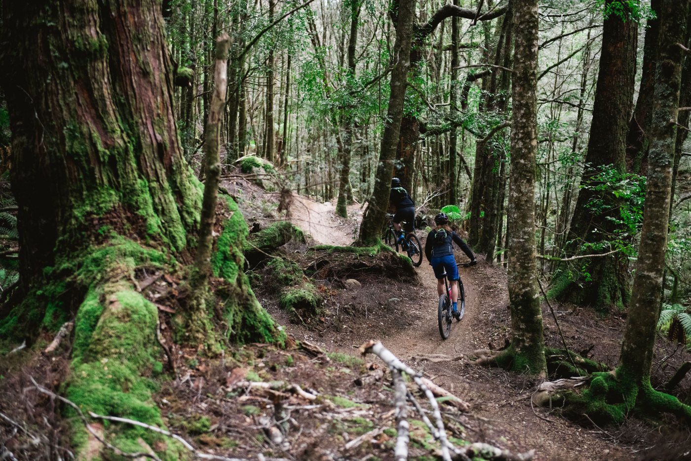 The goblin forests of the Blue Tier Trail